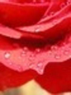 Rose & Jasmine Essential Oil Blend