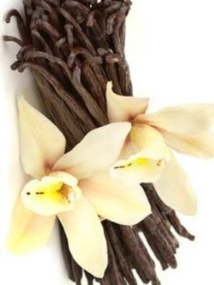Vanilla Absolute Essential Oil 10ml